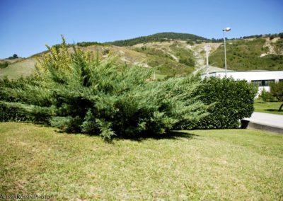 Balsamini Giardinieri - Giardini (34)