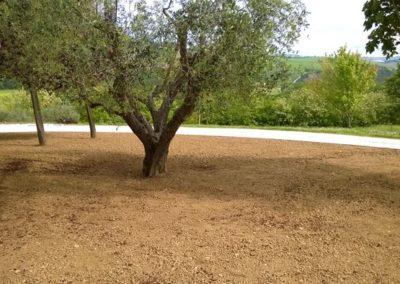 Balsamini Giardinieri - Giardini (40)