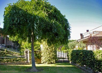 Balsamini Giardinieri - Giardini (6)