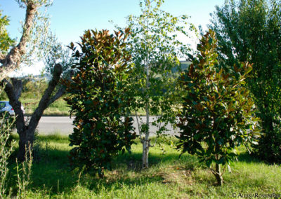 Balsamini Giardinieri - Vivaio (10)