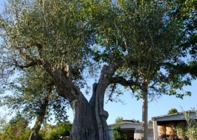 Balsamini Giardinieri - Vivaio (14)