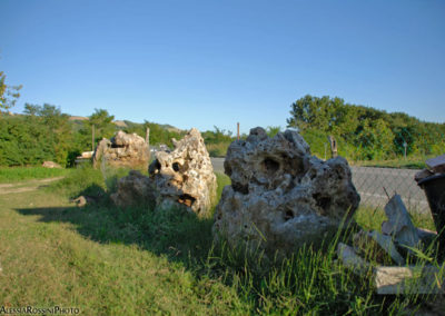 Balsamini Giardinieri - Vivaio (15)