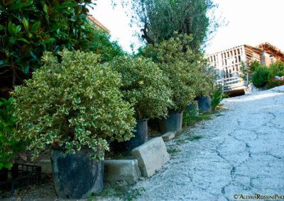 Balsamini Giardinieri - Vivaio (2)