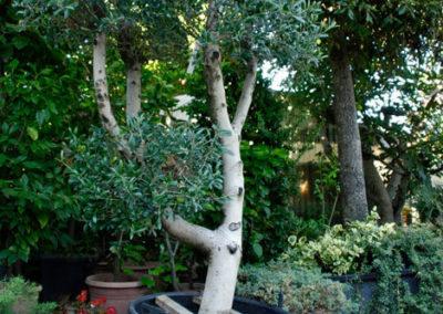Balsamini Giardinieri - Vivaio (5)