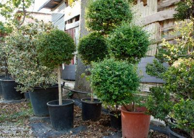 Balsamini Giardinieri - Vivaio (6)