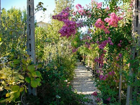Balsamini-giardinieri-Vivaio-fiorni-e-piante